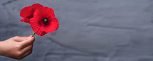 Australia National Day. Child hand holding red poppy flowers. Remembrance Day. Veterans Day. ANZAC Day. Lest we forget concept