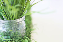 greenery in mason jar with copy space