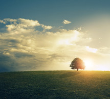 isolated tree under intense sunlight