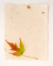 fall leaf on a blank piece of paper