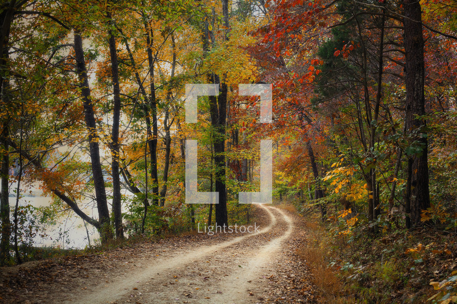 dirt road through a forest in autumn