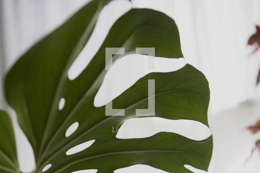 green leaf of a houseplant