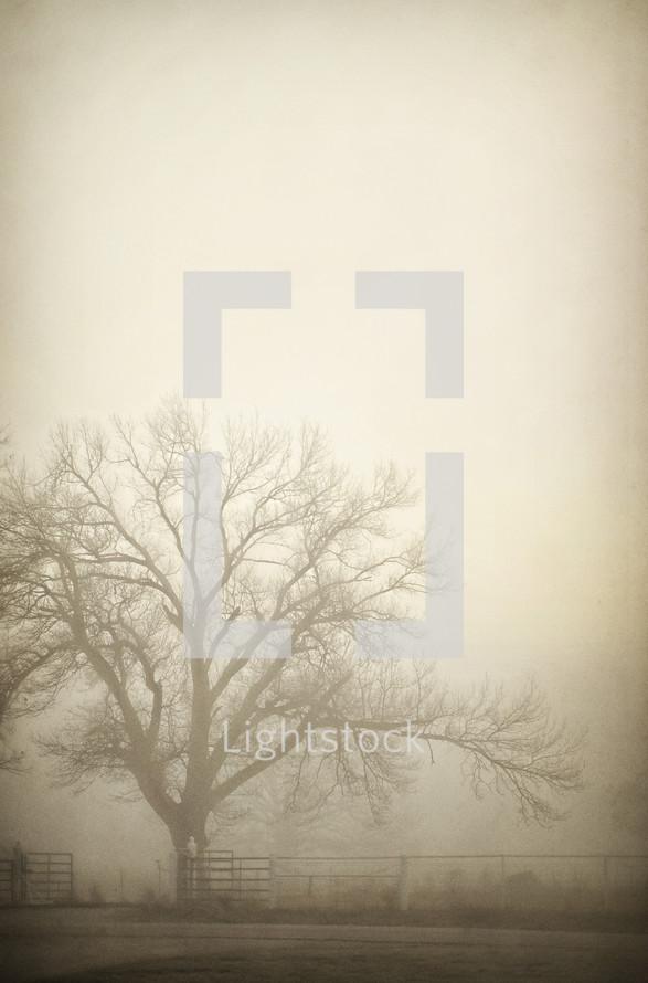 Barren tree in mist