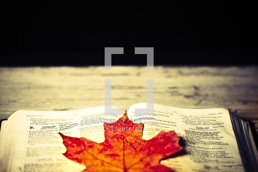 An orange leaf lying on an open bible