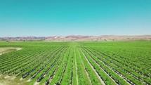 rows of farmland