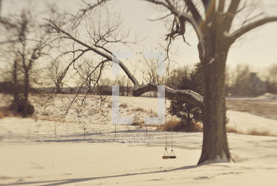 Tree swing in the winter