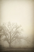 Barren tree in mist