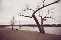 bare tree beside water - bridge in background