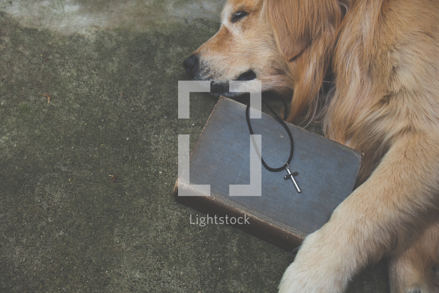 dog lying next to a silver cross on a Bible