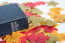 Holy Bible on fall leaves.