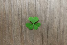 green 3 leaf clover