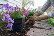 a woman planting flowers in a flower bed