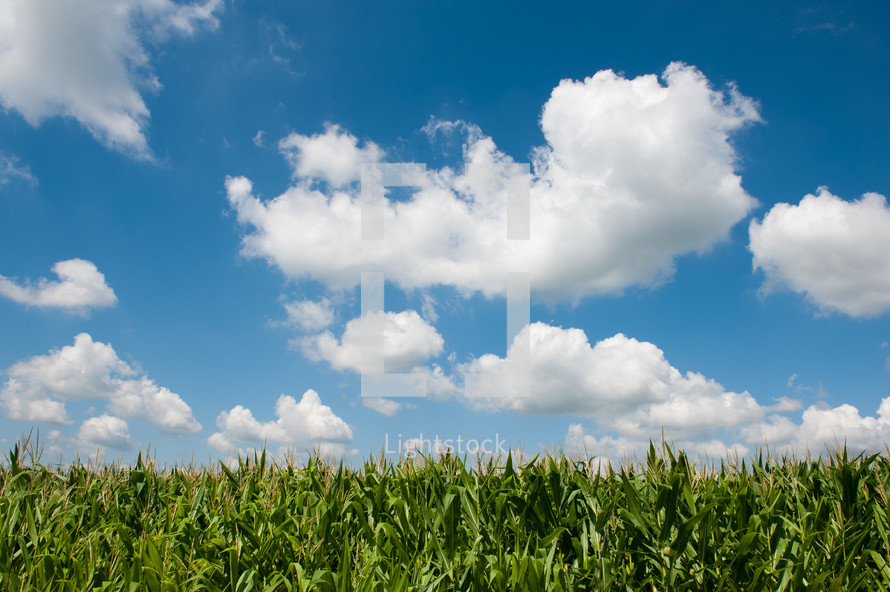 Blue sky with green grass