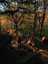 a person hiking in a forest in fall