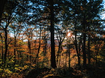 fall forest at sunset