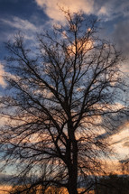 winter tree at sunset