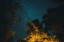 tops of trees and stars in a night sky