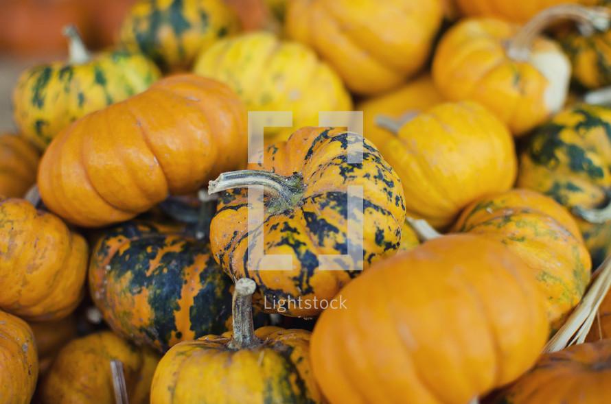 stack of mini pumpkins