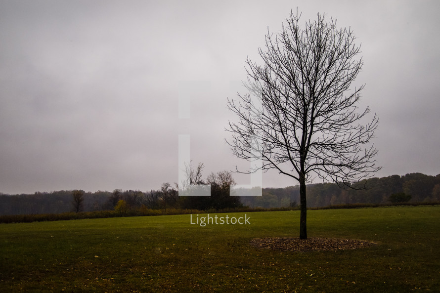 isolated tree in a field