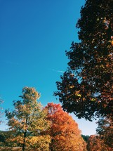 fall trees with a blue sky backdrop