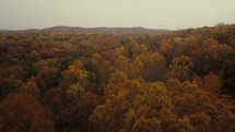 aerial view over a fall forest