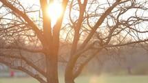 sunburst behind a bare tree