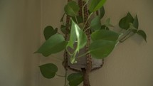 house plant in a hanging basket