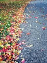 fall leaves on asphalt