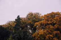 fall trees and overcast sky