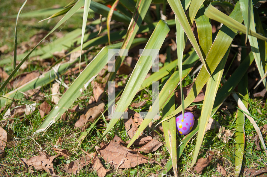 hidden Easter eggs under a plant
