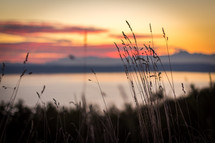 tall grasses at a lake shore at sunset