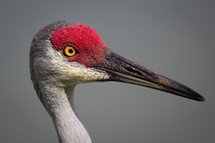red headed crane