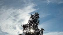 sunburst through tree branches