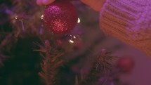 Christmas Tree Shoot