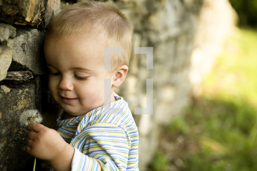 toddler boy holding a dandy lion
