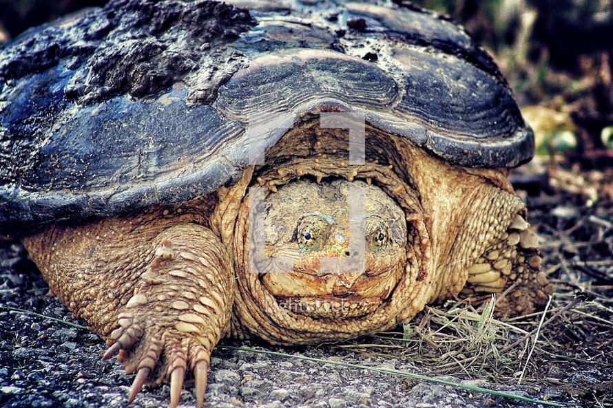 turtle crawling on ground