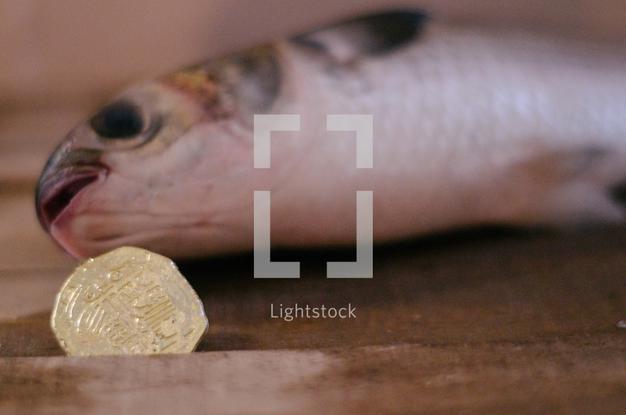 A coin from a fish's mouth.