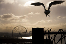 seagull and ferris wheel