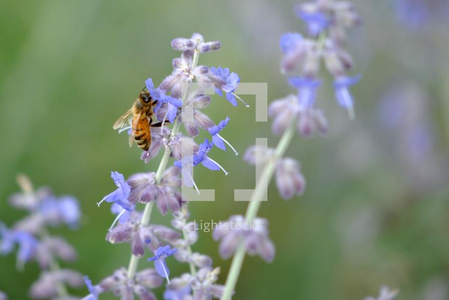 Bee on flowers in bloom.