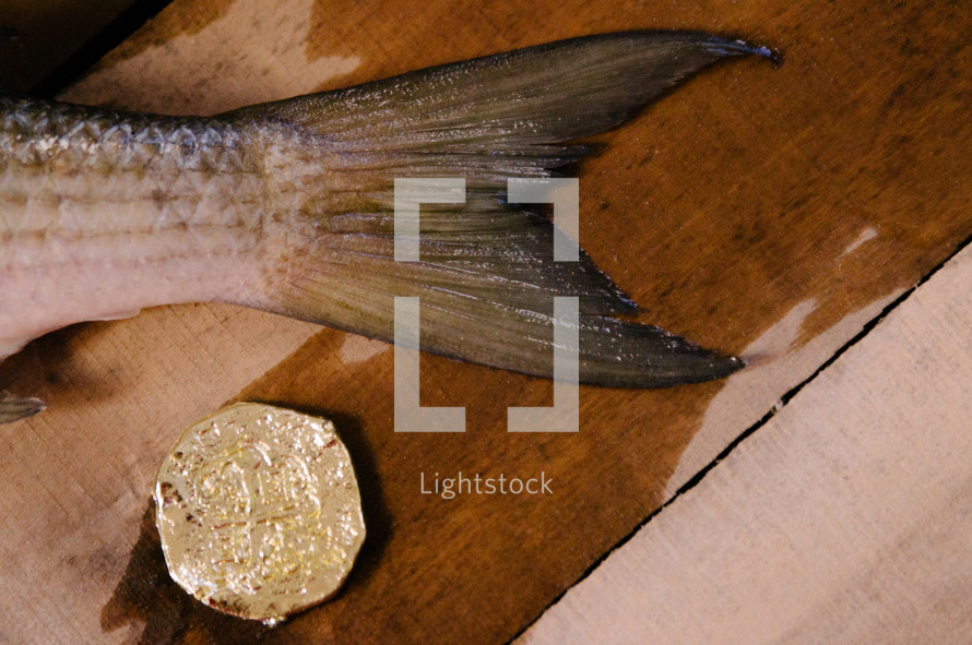 Fish and Coin