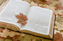 Bible on fall leaves