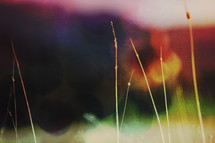 photo of long grass layered and textured with light and color to create background
