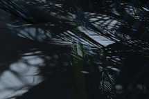 layered and toned various shadows of palm branches