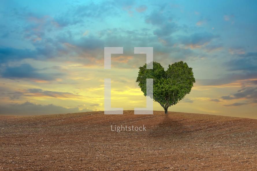 heart shaped tree in a field