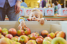 toddler boy picking out apples