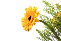 yellow gerber daisy flower arrangement