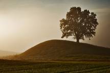 a tree on a hill at sunrise