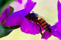 pollination of a flower