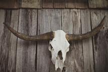 Bull horns and skull