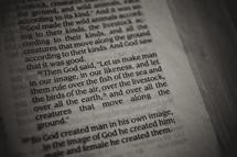 man in his image - Genesis Bible verse